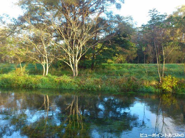 朝陽輝く蓼川