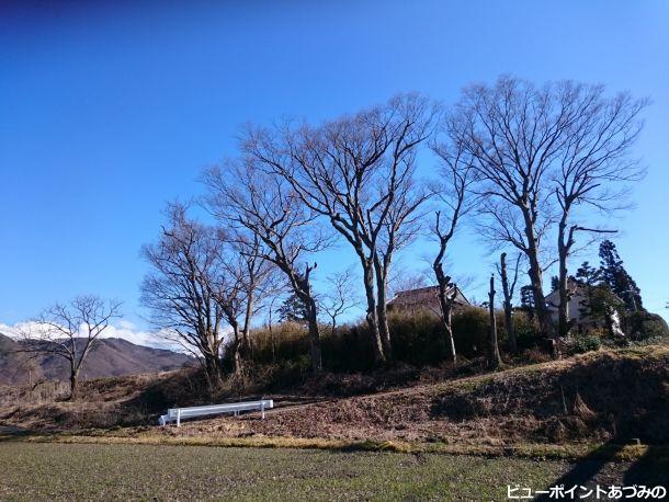 段丘のケヤキ