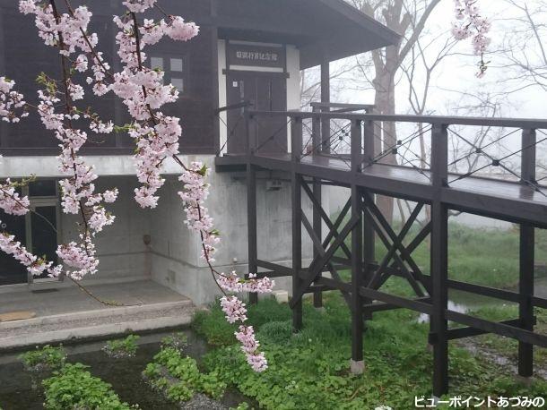 わさび田と百楽桜