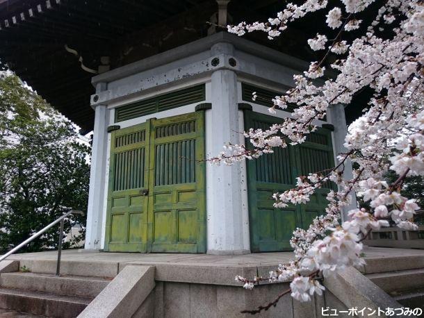 一乗寺の桜