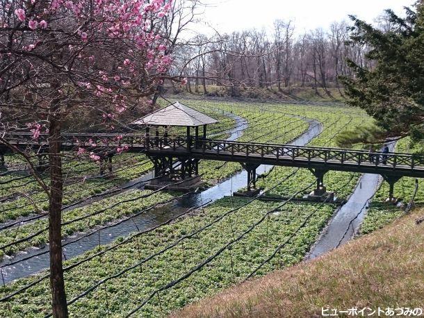 春の架け橋