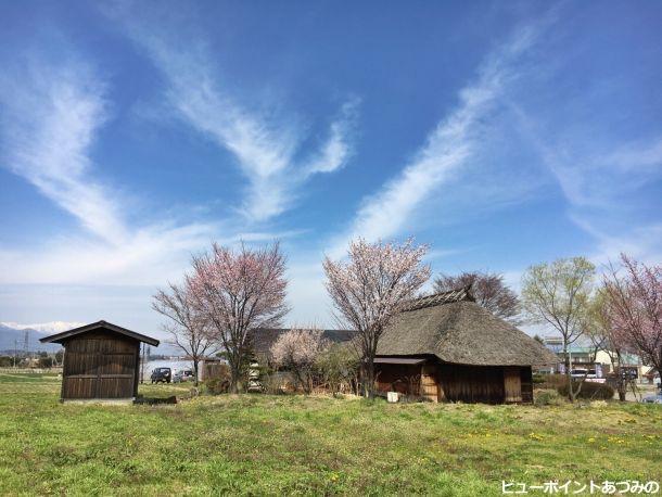 桜と古民家