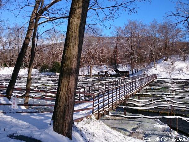 わさび田の雪景色