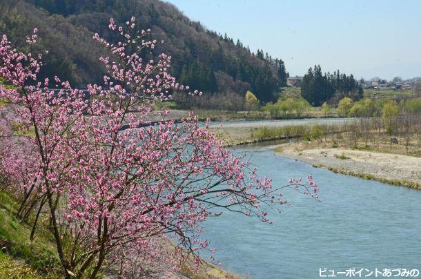 春色の犀川
