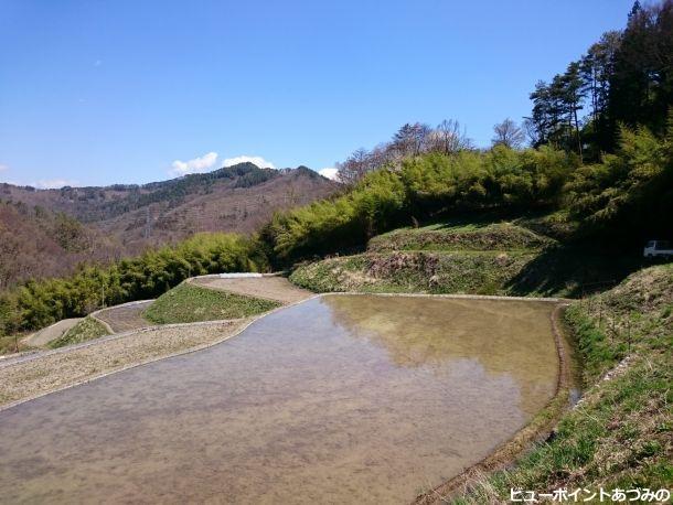 棚田と竹林