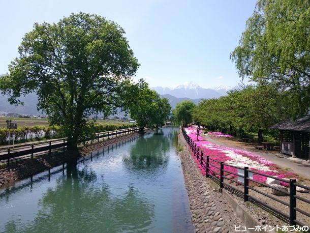 拾ヶ堰と芝桜
