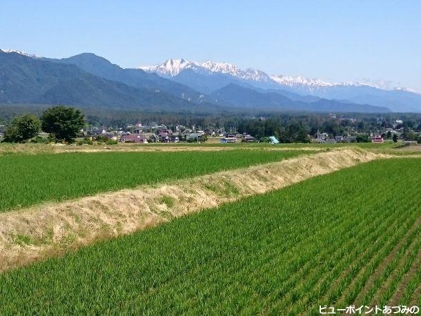 田園と後立山連峰