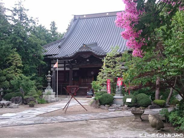 法蔵寺の百日紅