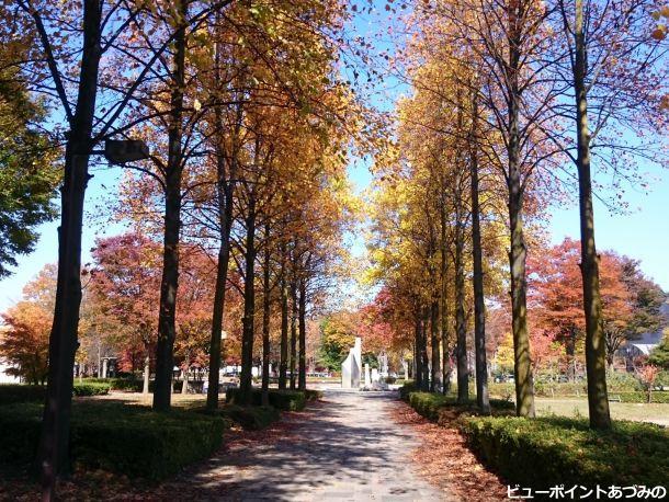 ユリノキ並木の黄葉