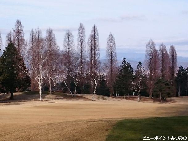 芝生と冬木立