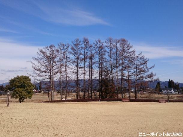 芝生と落葉樹