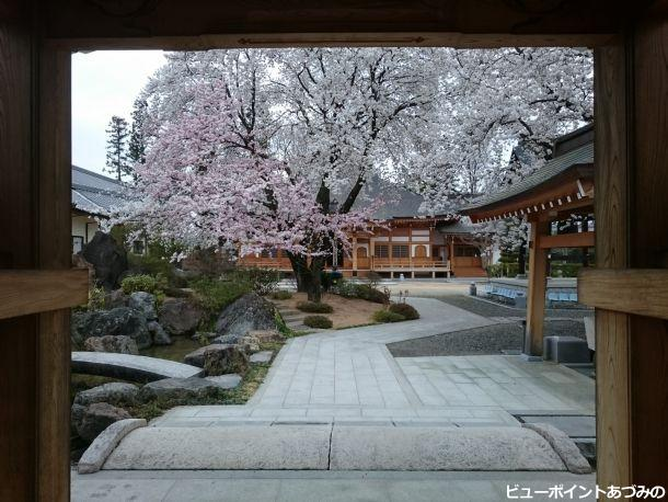 春色の参道