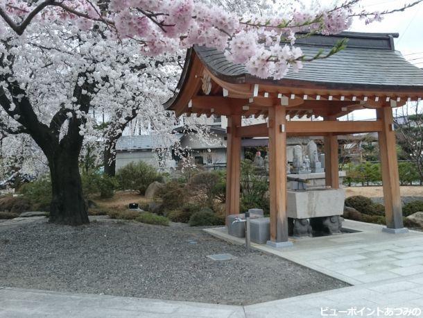枝垂桜と手水舎