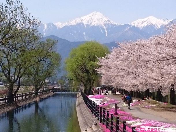 桜と拾ヶ堰と常念