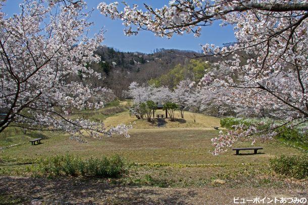 桜咲く砂防広場