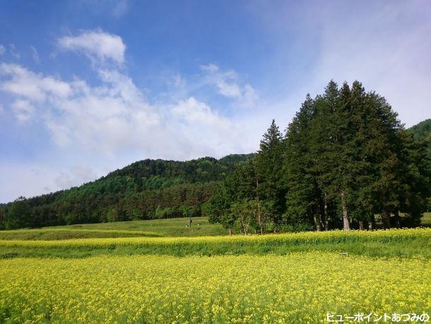 里山の黄色い絨毯