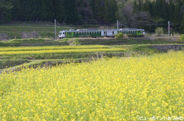 菜の花畑を往く