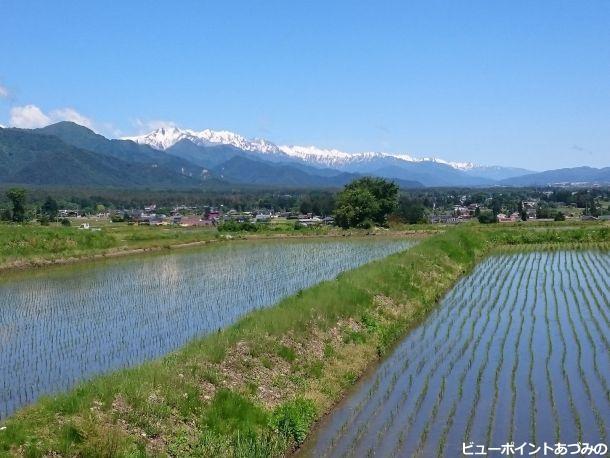 水田と後立山連峰