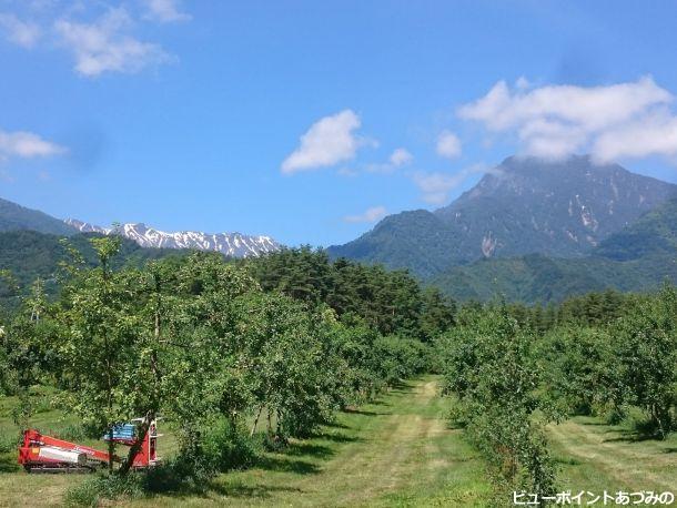 林檎畑と大天井岳