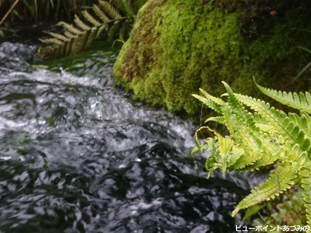 湧き水と苔
