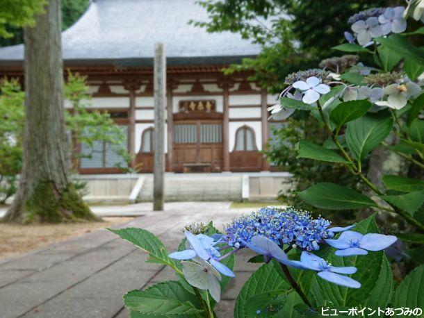 紫陽花と青原寺