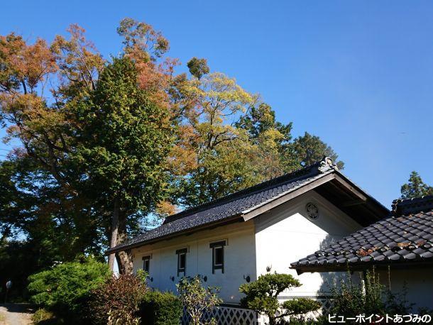 土蔵を彩る屋敷林