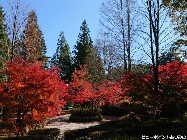 秋の木々の競演