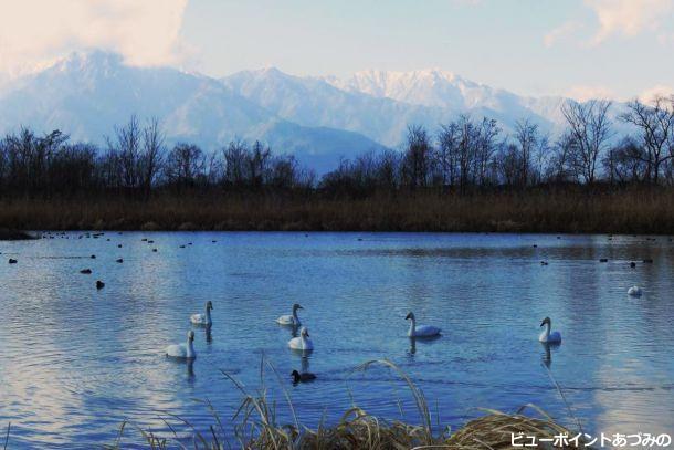 水鳥たちの楽園