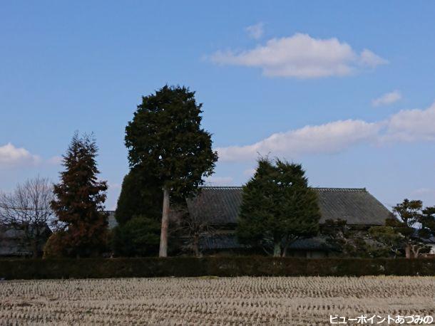 本棟造と屋敷林