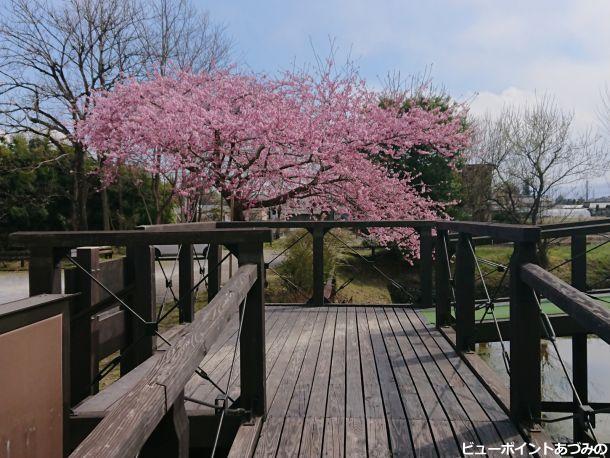 ウッドデッキと百楽桜