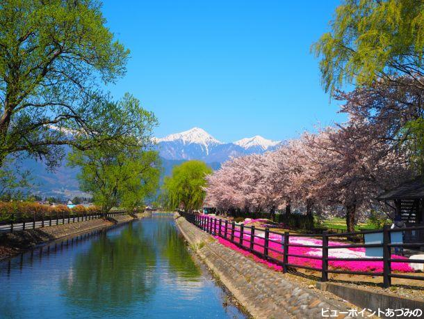 安曇野の春満開