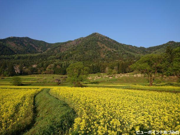 菜の花と角蔵山