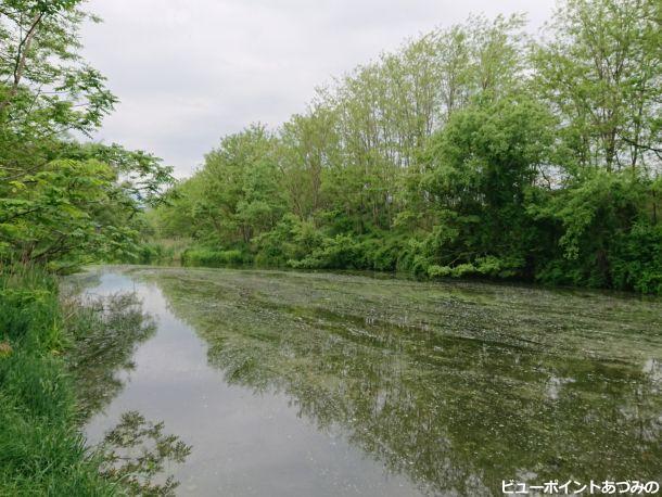 湧水の花筏