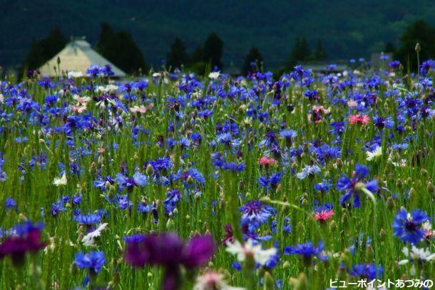 安曇野民家とお花畑