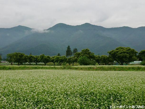 角蔵山と蕎麦畑