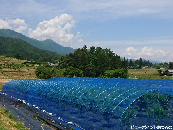 天蚕飼育林と有明山