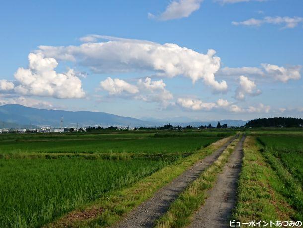 田舎路と夏空