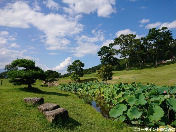 蓮池と夏空
