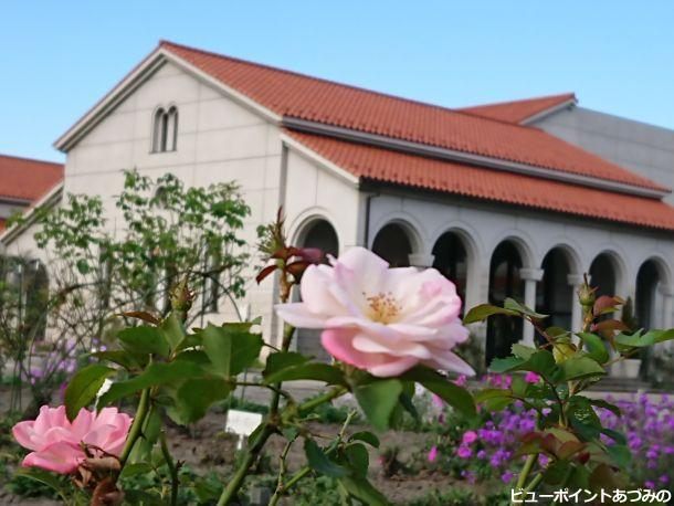 秋薔薇と美術館