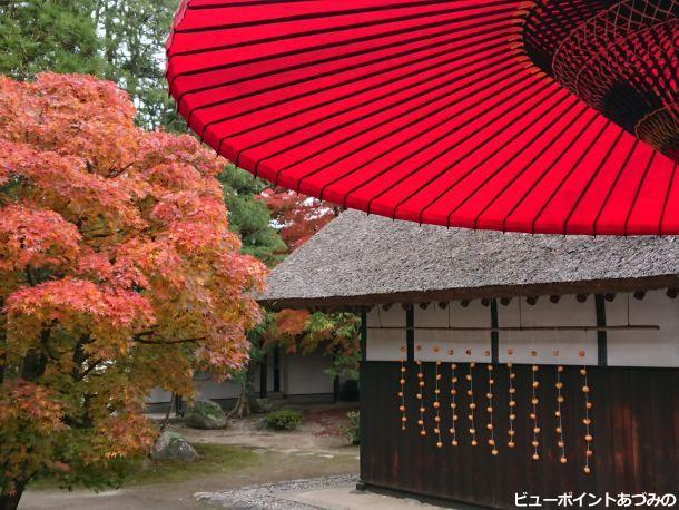 和傘と吊るし柿