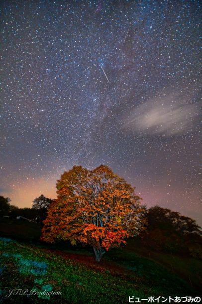 七色カエデと星の共演