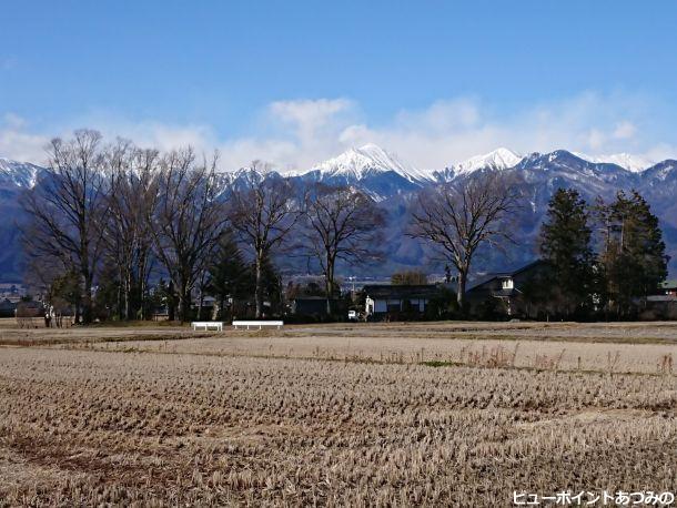 欅の屋敷林と常念岳