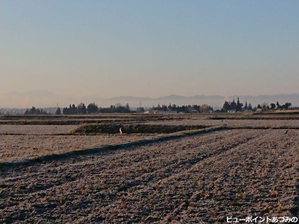 朝霜と屋敷林