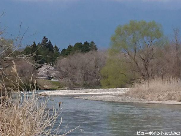 河畔の新緑と桜