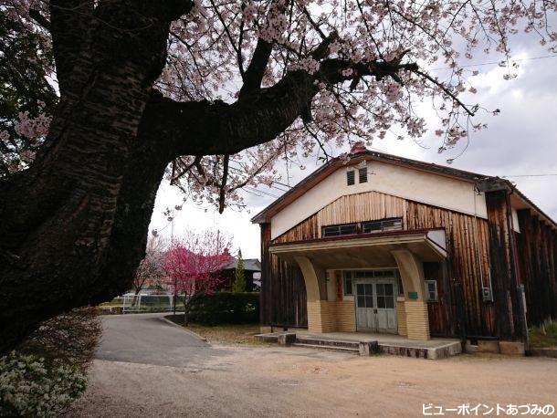 桜の古木と新屋公民館
