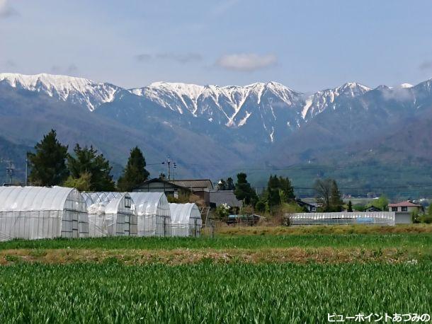 麦畑と蝶ヶ岳