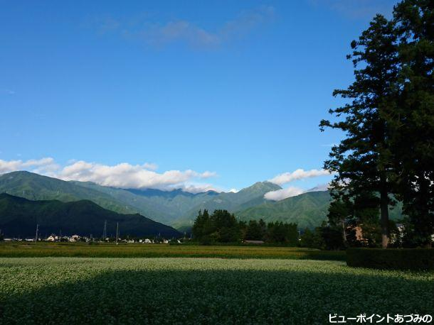 蕎麦の花と常念岳