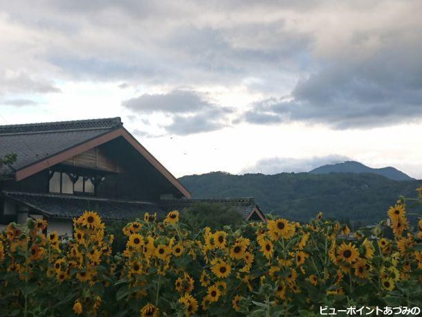 本棟造と向日葵