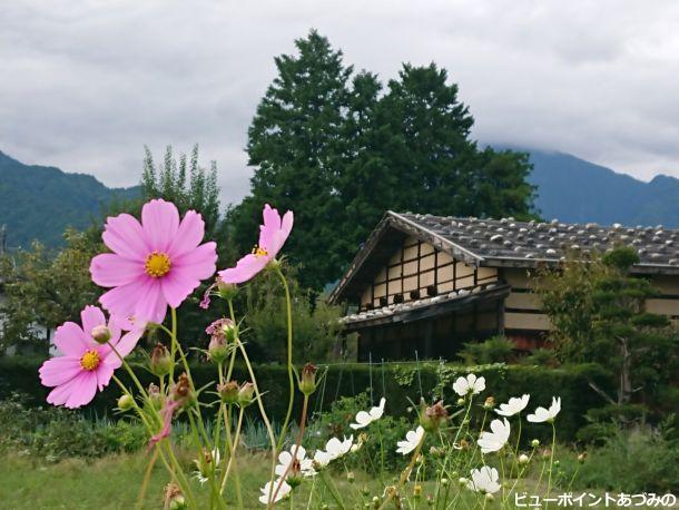 石置屋根と秋桜