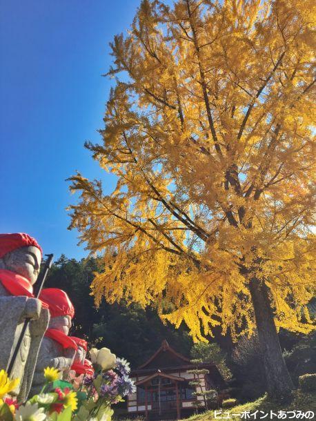 長福寺の大銀杏